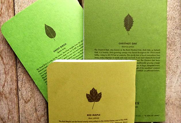 Field Notes Shenandoah leaves