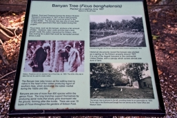 Info plaque on the one-acre banyan tree
